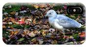 Seagull In The Fallen Leaves IPhone Case