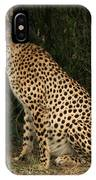 Seated Cheetah IPhone Case