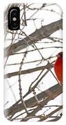 Seeing Red - Northern Cardinal - Cardinalis Cardinalis IPhone Case