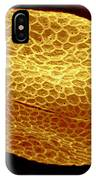 Sem Of Nasturtium Pollen IPhone Case