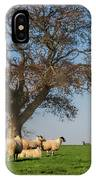Sheep In Somerset IPhone Case