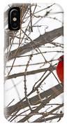 Showing His Colours - Northern Cardinal - Cardinalis Cardinalis IPhone Case