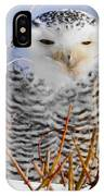 Sitting Snowy Owl IPhone Case