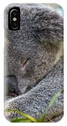 Sleeping Koala - Canberra - Australia IPhone Case
