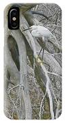 Snowy Egret - Egretta Thula - On Marsh Tangle IPhone Case