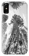 Snowy Sequoias At Calaveras Big Tree State Park Black And White 6 IPhone Case