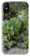 Sonoran Cactus IPhone Case