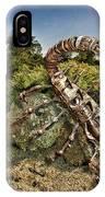 Spider Sun IPhone Case