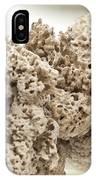 Sponges On The Docks IPhone Case