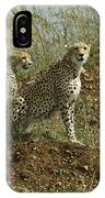 Spotted Cats IPhone Case