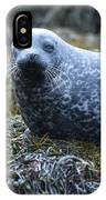 Spotted Coat Of A Harbor Seal IPhone Case