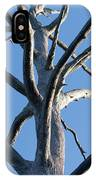 Sprawling Dead Tree IPhone Case