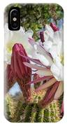 Spring Easter Cactus Blooms 789 IPhone Case