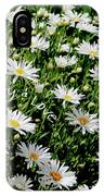 Spring Loyal Love Daisies  IPhone Case