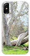 Spring Sycamore Tree IPhone Case