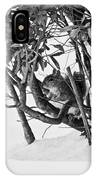 Squirrel In Low Branches IPhone Case