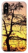 St Johns River Tree IPhone Case