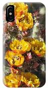 Staghorn Cholla Blossoms IPhone Case