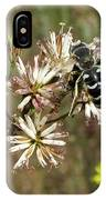 Striped Bee IPhone Case