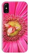 Stunning Gerbera IPhone Case