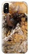 Sugarloaf Snail IPhone Case