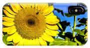 Sunflower 2 IPhone Case