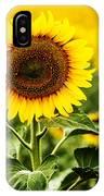 Sunflower Crops On A Farm In South Dakota IPhone Case