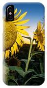 Sunflower Evening IPhone Case