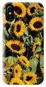 Sunflower Near Van Gogh Museum IPhone Case