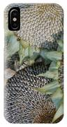 Sunflower Seed Heads Dried To Perfection IPhone Case