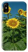 Sunflowers Weldon Spring Mo Ver1_dsc9821_16 IPhone Case