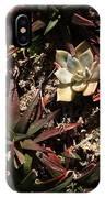 Sunlight On Succulents IPhone Case