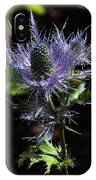 Sunlit Bloom Of Alpine Sea Holly IPhone Case