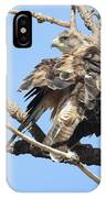 Swainson Hawk IPhone Case