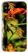 Swallowtail Hanging On The Crocosmia IPhone Case