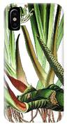 Sweet Flag Or Calamus, Acorus Calamus IPhone Case