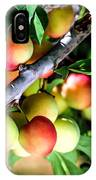 Sweet Ripe  Plum On A Branch IPhone Case