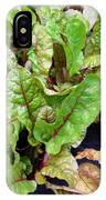 Swiss Chard In A Vegetable Garden 1 IPhone Case