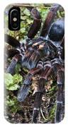 Tarantula Pamphobeteus Sp Male, Mindo IPhone Case