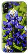 Texas Bluebonnets 005 IPhone Case