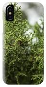 Texas Cedar Tree IPhone Case