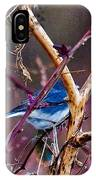 The Blue Of Winter In The Woods IPhone Case