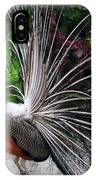 The Many Quills Of A Peacock IPhone Case