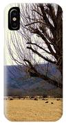 The Old Tree In Winter IPhone Case