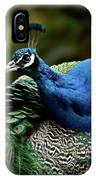 The Peacock - 365-320 IPhone Case
