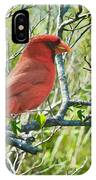 The Red Cardinal IPhone Case