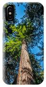 the Redwoods of Muir Woods IPhone Case
