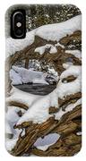 The Roots Of Winter IPhone Case