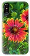 Three Gaillardia IPhone Case