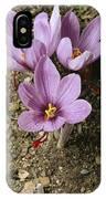 Three Lovely Saffron Crocus Blossoms IPhone Case